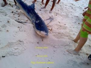 Requin Menzel Temime