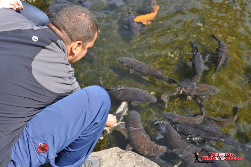 poissons jardin japonais