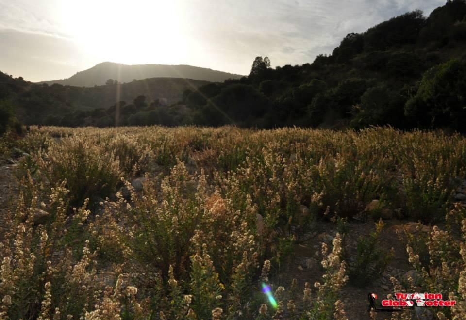 Oued Sidi Medien