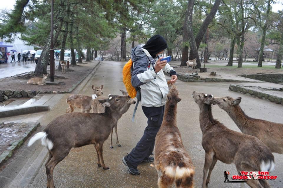 Daims Nara